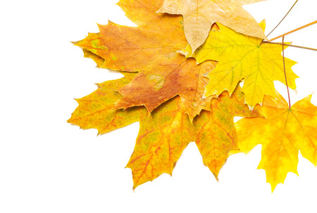 several yellow and brown maple leaves in the corner Banco de Imagens