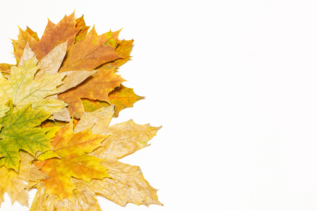 autumn maple leaves on a white background in the left corner