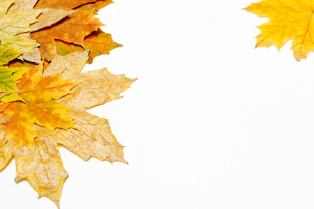 autumn maple leaves on white background Banco de Imagens