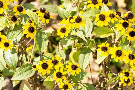 yellow autumn flowers and bright sun Stock Photo