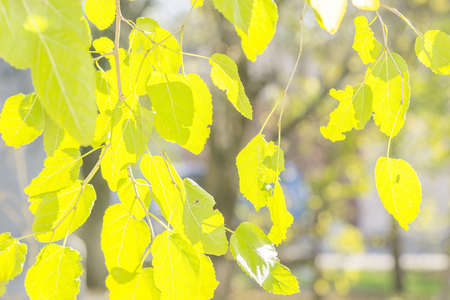 branch of autumn green and yellow leaves and sunlight