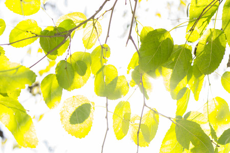 branch of green and yellow leaves and sunlight