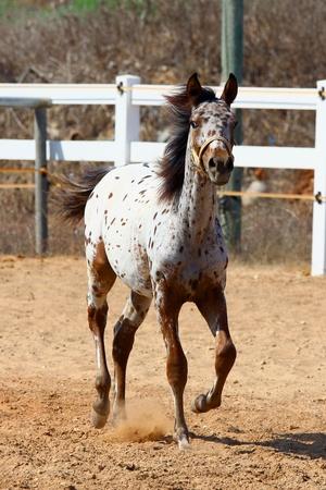 shot of running pretty  horse Stock Photo - 10658373