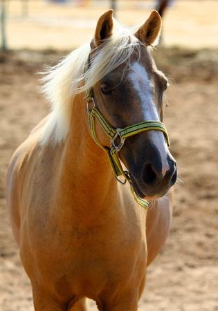 shot of running pretty  horse