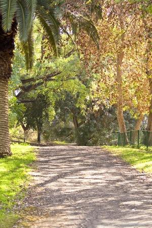 beautiful way in wild oak forest