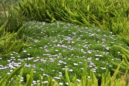 meadow of wild flowers photo
