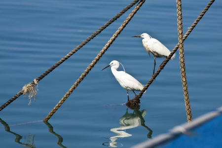 White Egret on yacht cable Stock Photo - 13618454