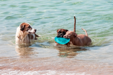a swimming dogs with plate Stock Photo - 19052238