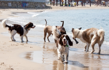 dogs playing  in water at the beach