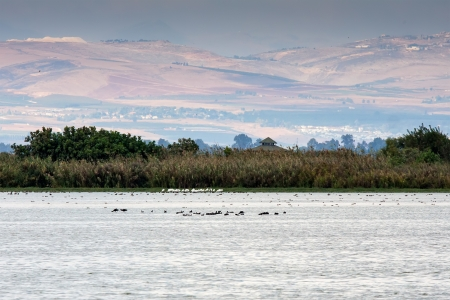 river  landscape with birds photo