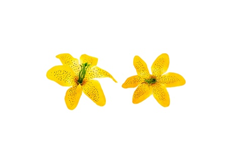 spurious: yellow plastic decorative flower isolated on white