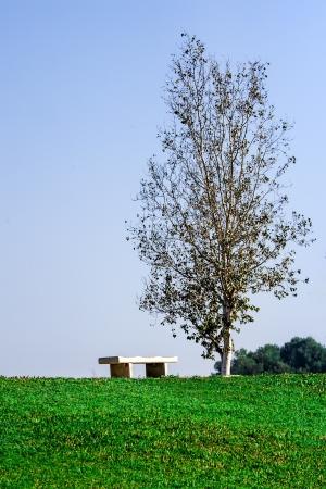 racconigi: Lonely tree and bench