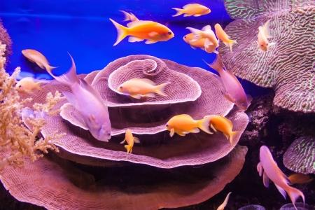 Aquarium coral reef Stock Photo - 21870336