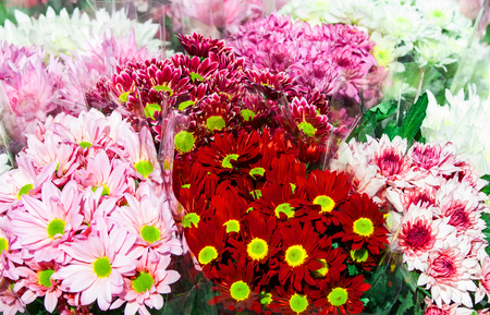 colorful variety of flowers sold in the market