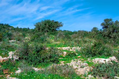 wild landscape of Galilee, Israel Stock Photo
