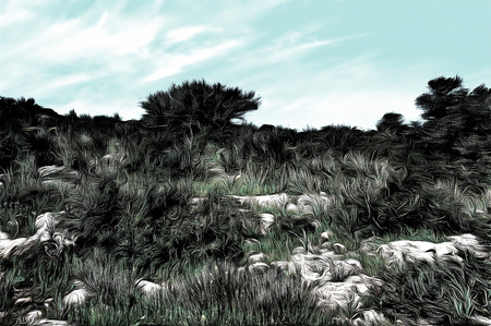 wild landscape of Galilee, Israel  drawing filter