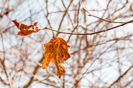 Autumn leaves with clear sky background