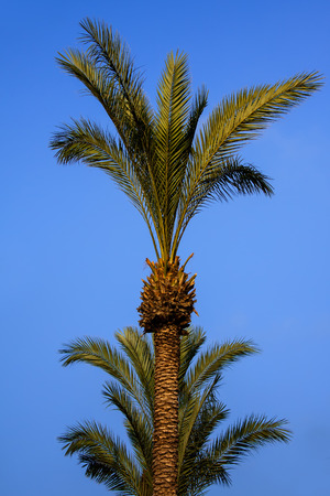 high palm and blue sky