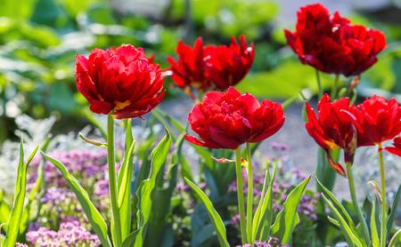 Cologne Springtime Botanical Garden Flora