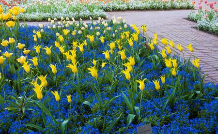 Cologne Springtime Botanicak  Garden  Flora