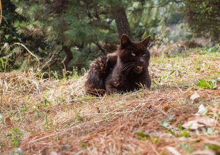 Brown cat in    Botanical   Koishikawa garden Tokyo.   Pet or wild?