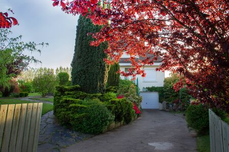 Beautiful garden of a country house: far in the courtyard there is a spreading tree with red leaves, bushes of a bush and a tall tree similar to cypress and a flowering tree - away in the courtyard, p