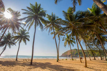 Idyllic Beach near Goakarna town - palms and Indian Ocean: sunbeams, cow and sand, people at far distance near water