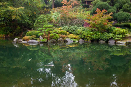 Amazing autumn nature: trees anf bushes and reflcetion in water in Japanese garden in Kaiserslautern orange leaves.