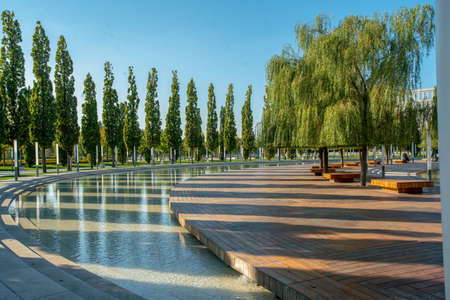 Krasnodar -Park Krasnodar. a row of poplars and an artificial reservoir. the so-called Galitsky Park and willow trees and wooden benches under them 스톡 콘텐츠