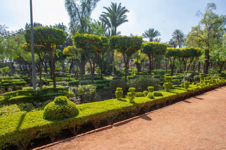 Topiary plants in Cyber Park in Marrakech with tanger trees and bushes. Footpath. Beauty of nature in Morocco.
