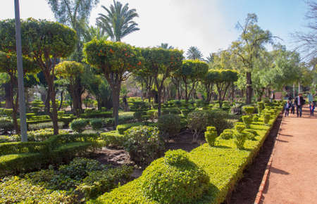 Cyber Park in Marrakech with tanger trees. Beauty of nature in Morocco. Unrecognizable persons Banque d'images