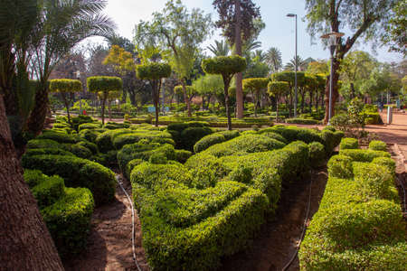 Topiary plants in Cyber Park in Marrakech with tanger trees. Beauty of nature in Morocco.
