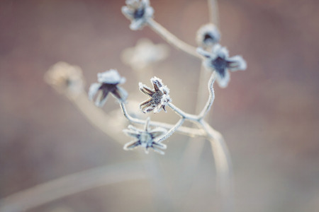 clear day in winter time: Poetic winter - frozen plants with snow crystals Stock Photo
