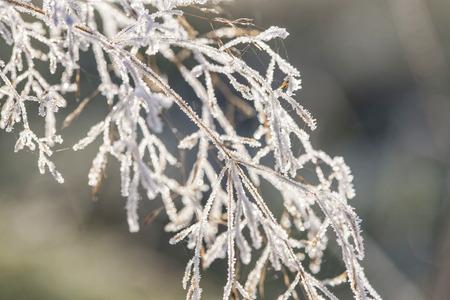 poetic: Poetic winter - frozen plants with snow crystals Stock Photo
