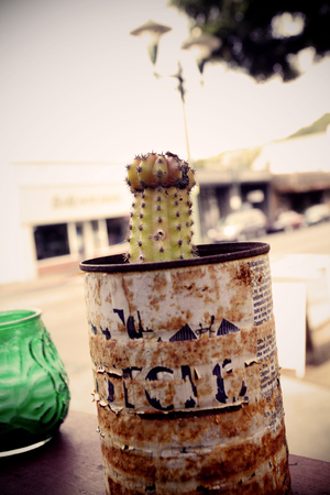 Cactus in old can, balcony decoration Imagens