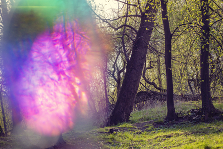 Magical hallucinogenic forest with color bokeh light