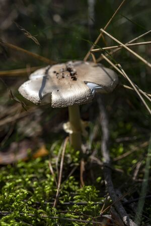 Detail of a mushroom growing in the forest
