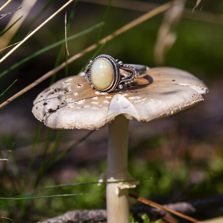 Silver ring with fire opal gemstone on forest mushroom 写真素材