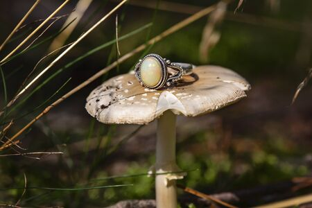 Silver ring with fire opal gemstone on forest mushroom Stock fotó - 132866573