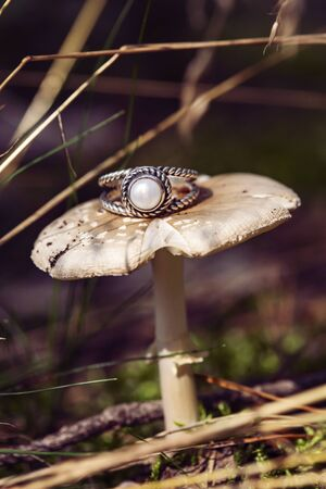 Silver ring with white river pearl on forest mushroom Stock Photo