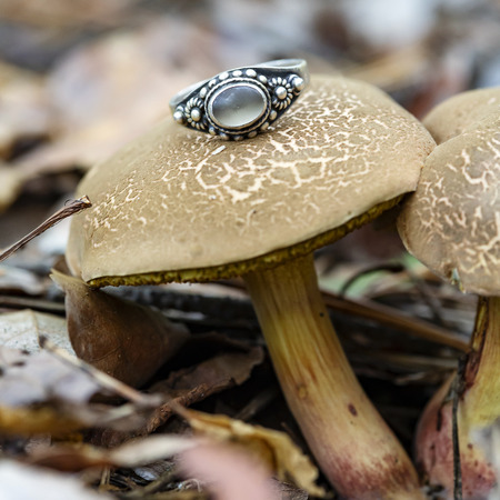 Silver gemstone ring on edible mushroom in the forest