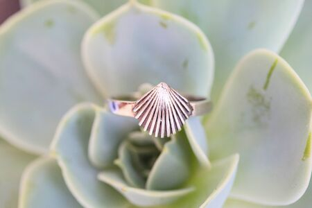 Beautiful elegant ring in the shape of shell arranged on green houseleek Stock fotó - 147941013