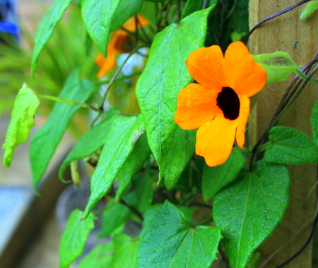 Creeper Green slope with bright orange flowers