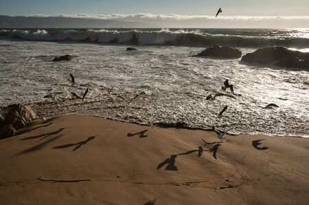The Empty Beach on the coast of Chile, seagulls fly over the waves of the sea free and calm