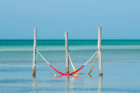 Hammocks hanging over the Mexican Caribbean Sea on Holbox Island - a seagull floats nearby. In the background the calm sea and the blue sky