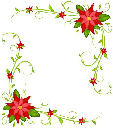 poinsettia: Poinsettia background