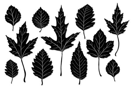 arboles blanco y negro: Hojas y flores vector silueta