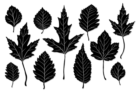 tree leaf: Leaves silhouette vector