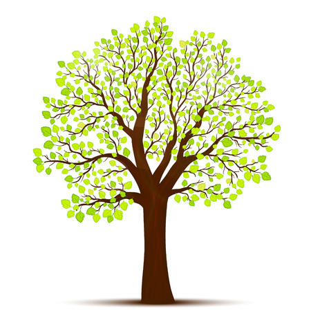 Tree with green leaves vector Illustration