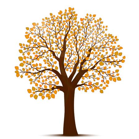 autumn tree: Autumn tree vector Illustration